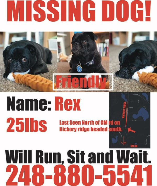 Runaway Pug Remains At Large Inside GM Proving Grounds