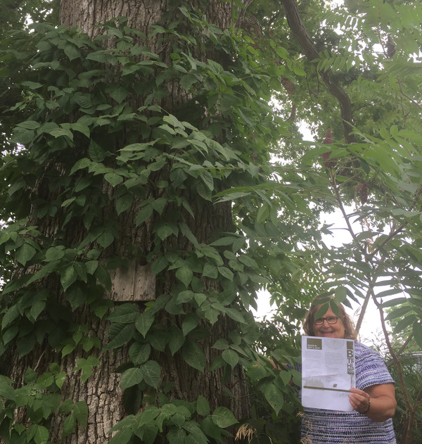 One Month Left To Find Biggest Tree In Each Michigan County