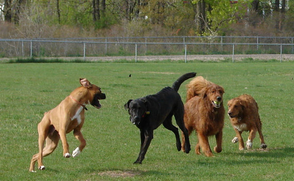 Fundraising Goal Exceeded For Proposed Milford Dog Park
