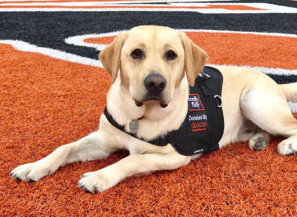 BAS Adds Third Therapy Dog, With Plans For Two More