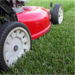 City Of Brighton Evaluating Summer Turf Maintenance & Snow Removal