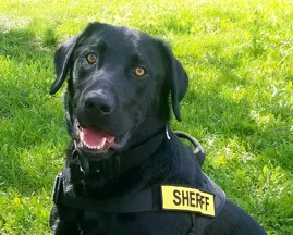 New Sheriff's K9 Trained To Detect Contraband In Jail