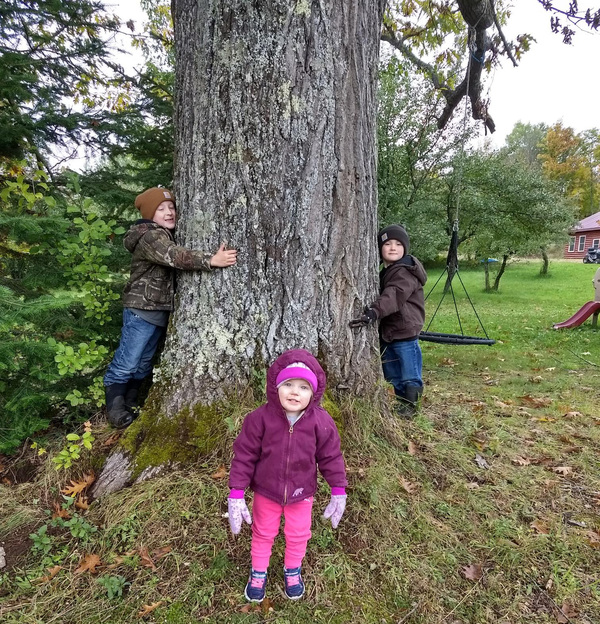 Michigan Big Tree Hunt Underway, Submissions Sought