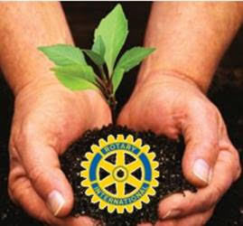 Rotary Members Planting Trees Across The County
